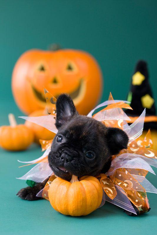 "The ""Halloween Classic"""