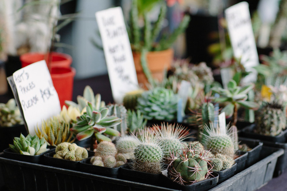 Cactusland's spiky display at the Queen Victoria Market - just opposite the Jam Donut Van. All plants grown in Melbourne. Photographs by Emma Byrnes.