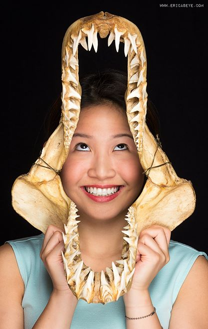 Shark Jaw.jpg