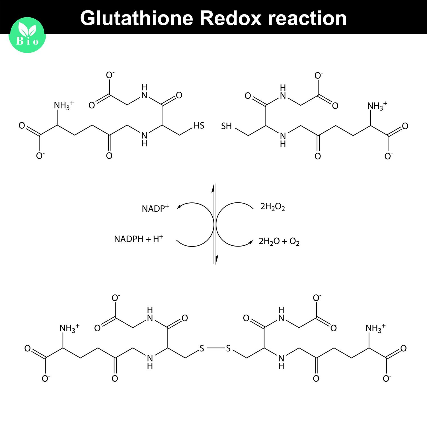 Glutathione, the Master Antioxidant