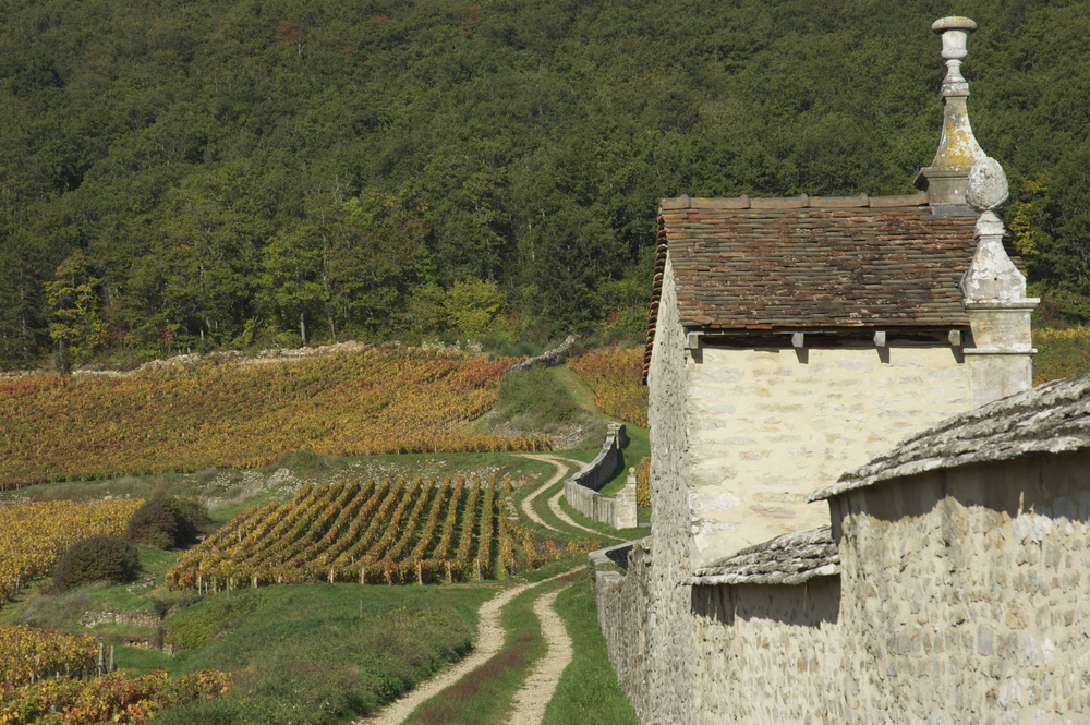 The wall enclosing Clos St Jacques in Gevrey Chambertin