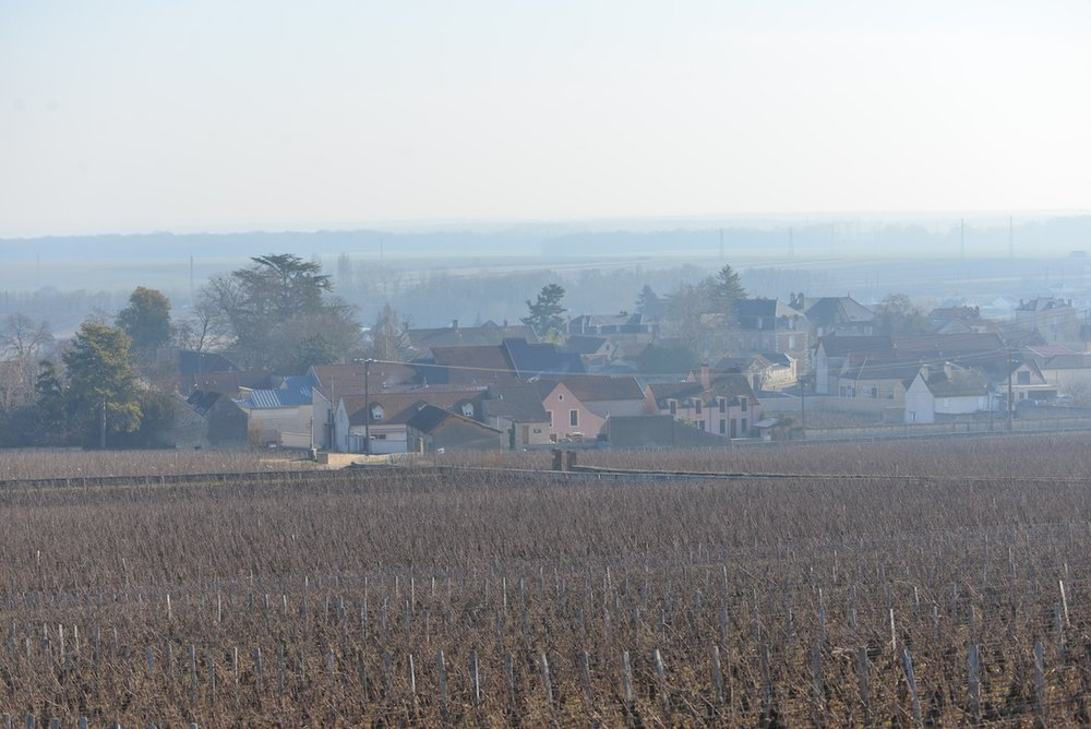 Vosne Romanee, Burgundy.  The winter months are an interesting time to walk the vines.  In the summer months there is green foliage, whereas in the winter, all is laid bare.
