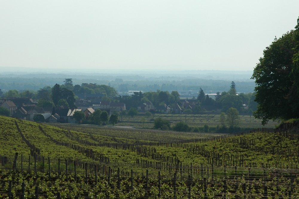 Gevrey Chambertin swimming in a sea of translucent green in May