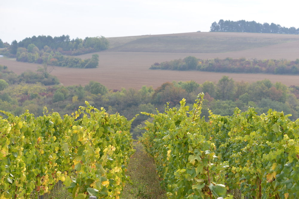 Prime new terroir on the hills around Dijon, Burgundy