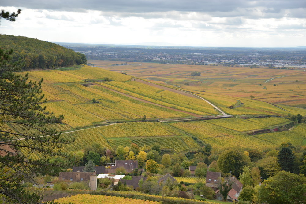 Pernand Vergelesses, and the Grand Crus vines on the Hill of Corton