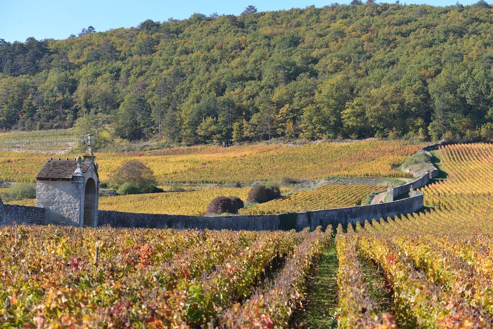 The famous wall enclosing Clos St Jacques in Gevrey Chambertin
