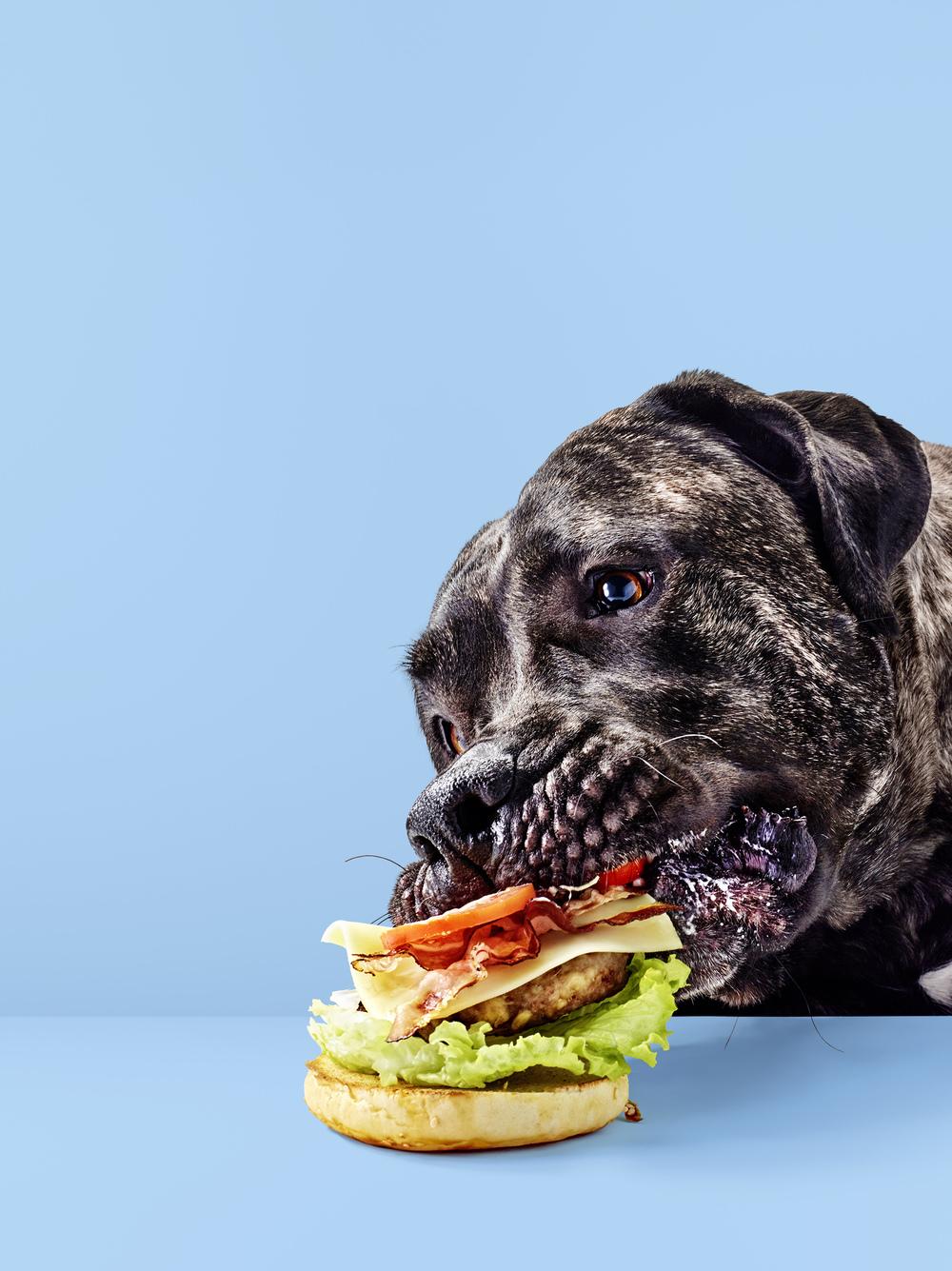 Hauptsache_Burger_04_Hund_frisst.jpg