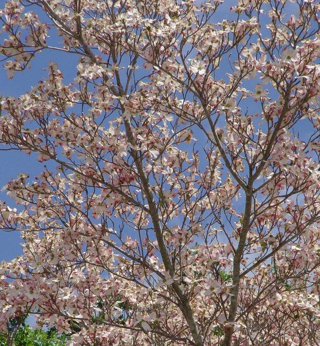 spring_driving_austin_texas.jpg