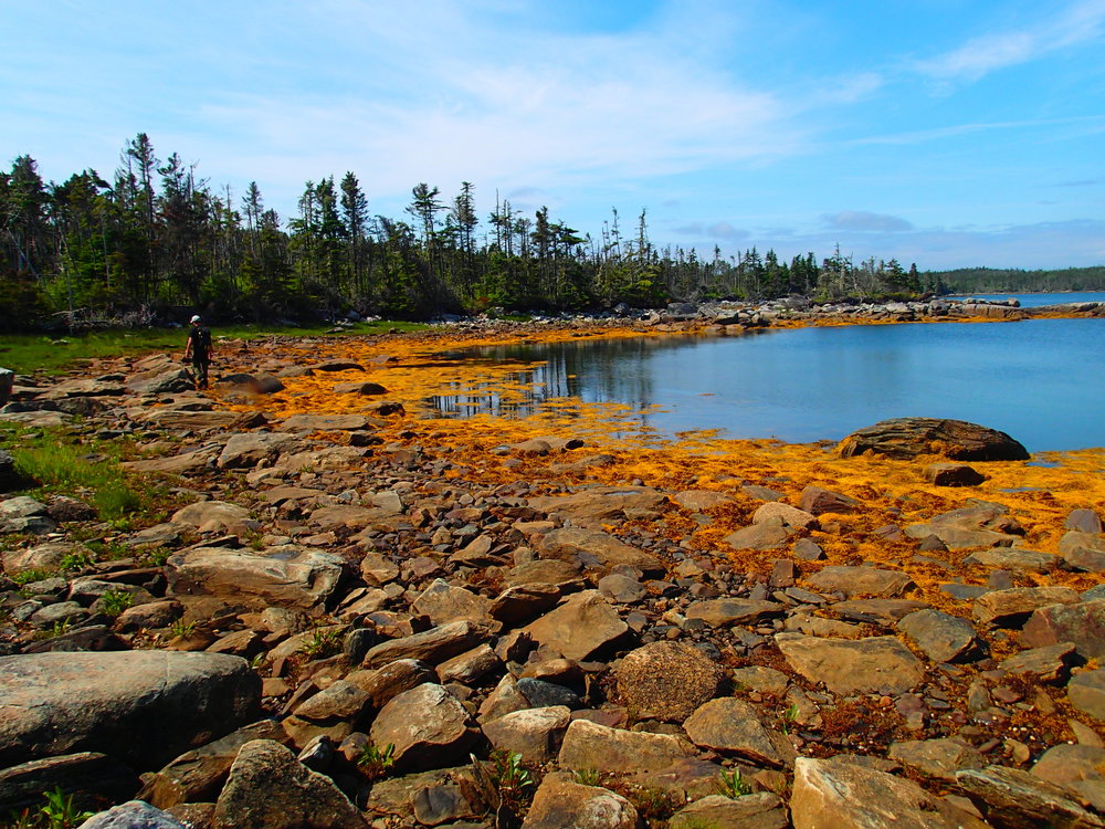 Shoreline on Gerard Island during a routine monitoring visit.