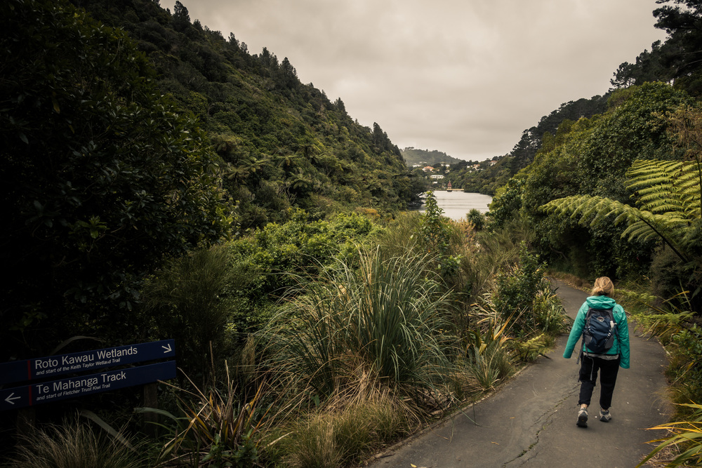 NEW ZEALAND - ZEALANDIA WILDLIFE SANCTUARY