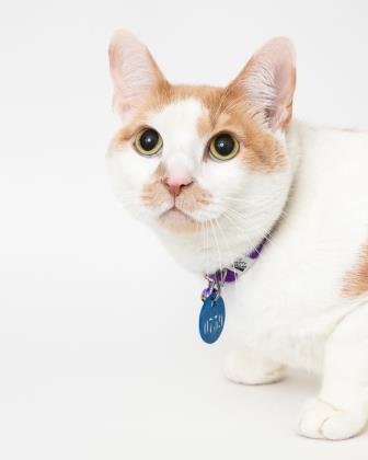 Sebastian  is a shorthair cat whose playful personality makes him almost dog-like.