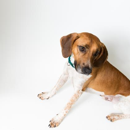 Tucker 's a coonhound, an outdoor country boy in need of love and special attention (but he likes his privacy during mealtimes).