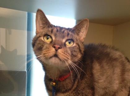 Meet  Jack Storm . He has FIV (feline immunodeficiency virus), so he needs some extra TLC.
