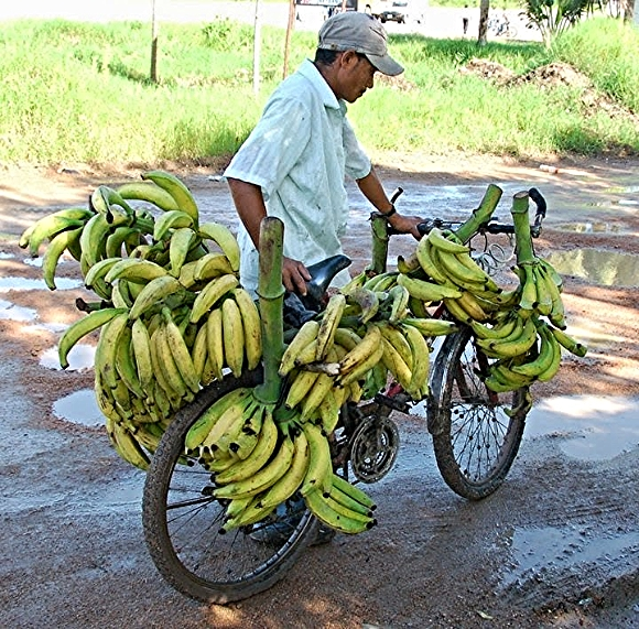 A banana merchant in Honduras loads up his bike./Photo courtesy of Bikes for the World