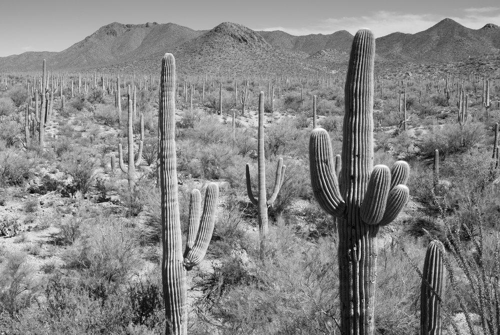 Saguaro National Park, Arizona, 2018