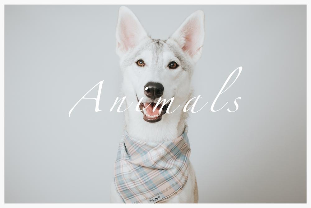 animals-thumb.jpg