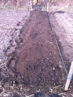 Preparing beds for the garlic.
