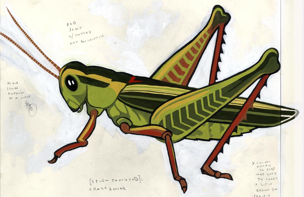 Grasshopper, MySci