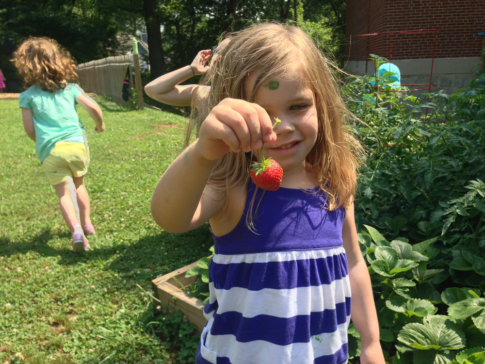 Lotus:  Abigail got to pick a strawberry right from the garden! Yum!