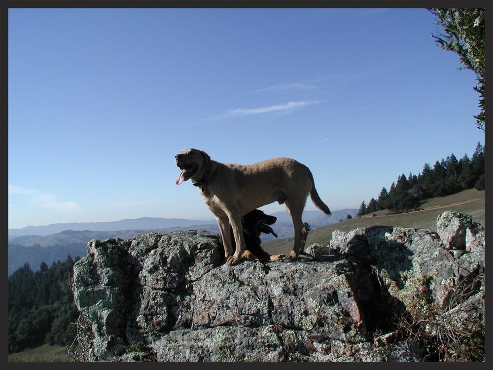 dogsonrock.jpg