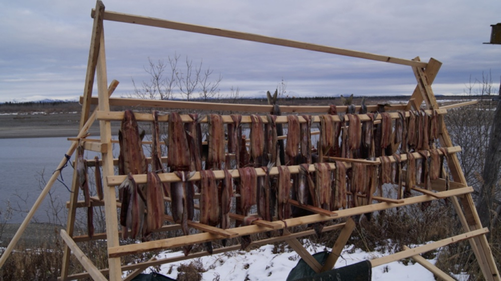 Salmon drying on racks near Noatak, AK