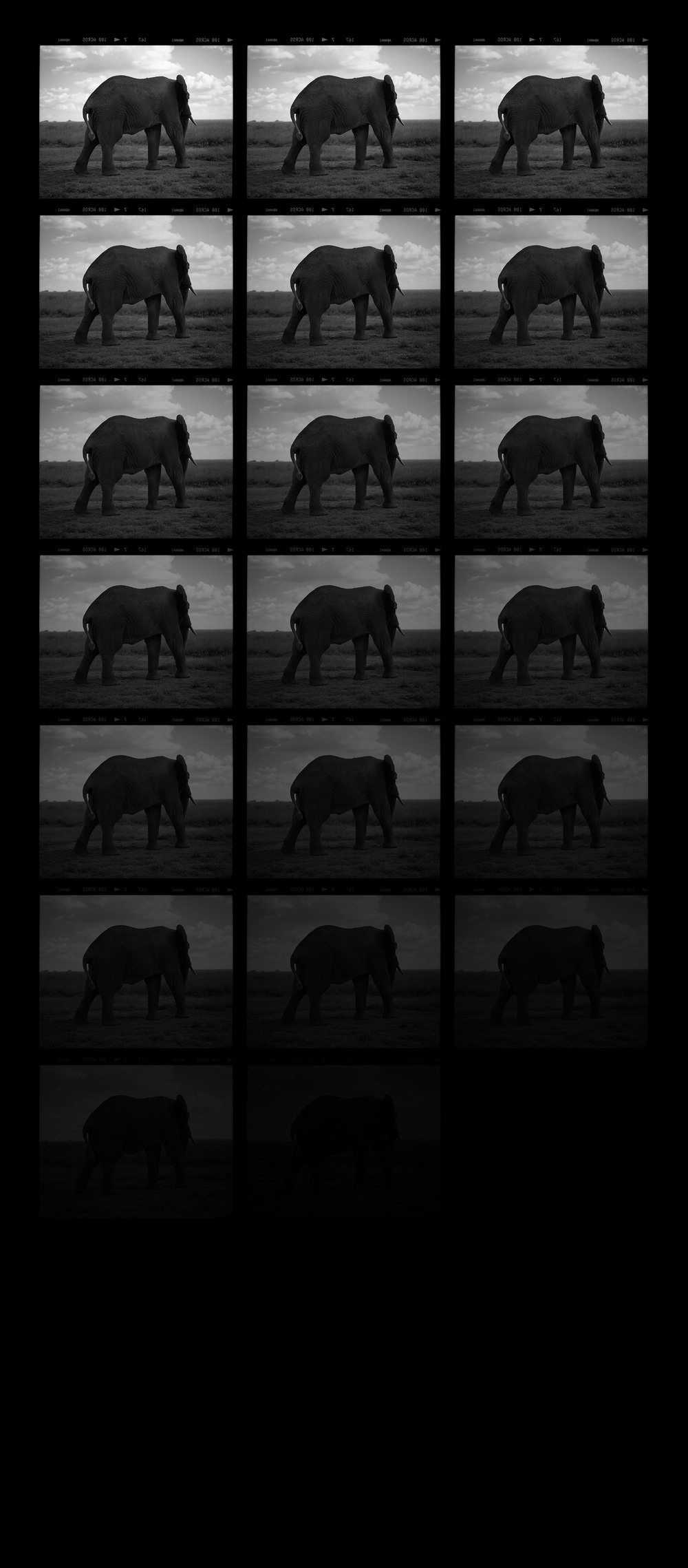 """Elephant Turning Away"""