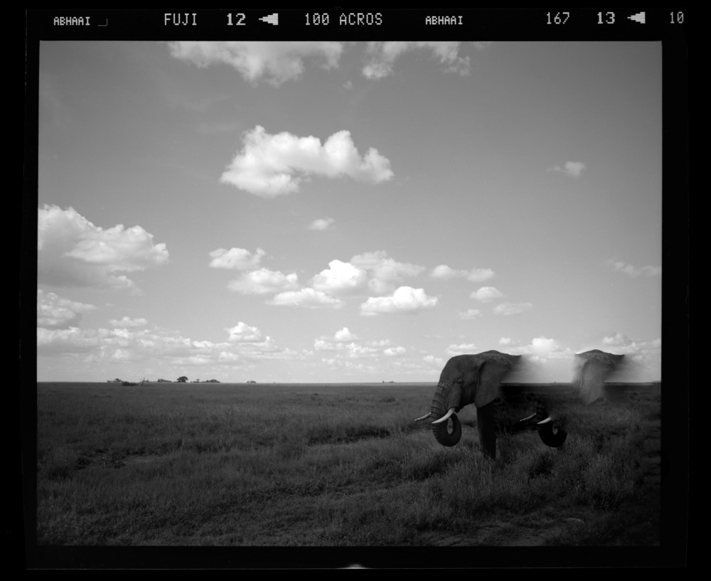 """Vanishing Elephant"""