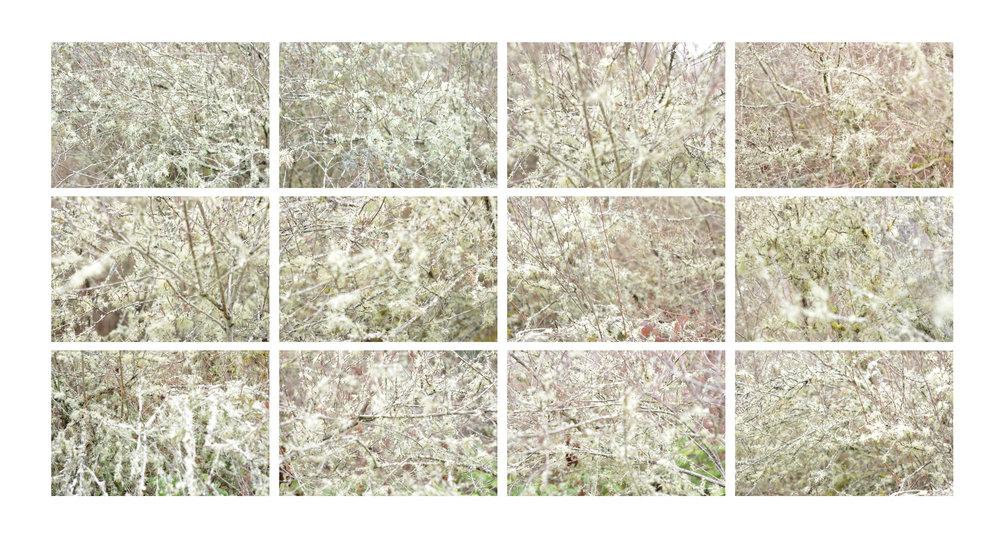 mossfrag.jpg