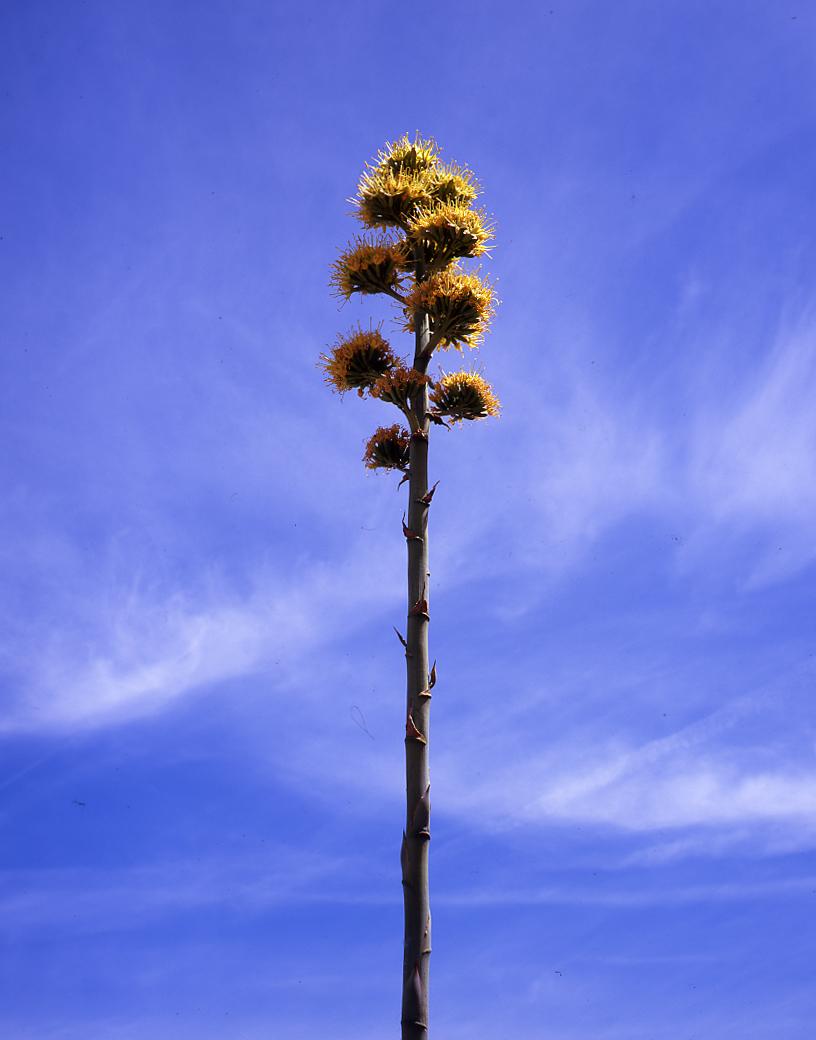 desert tree021.jpg