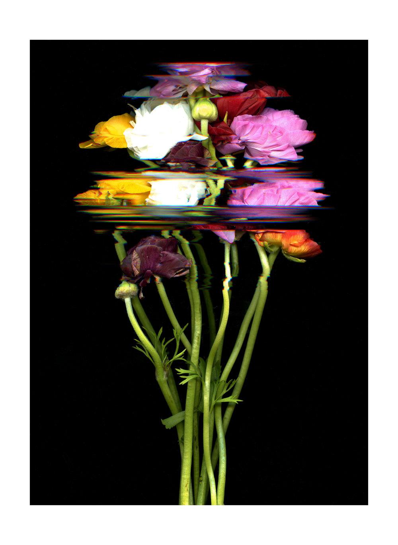 FlowerScan037editbordersmall.jpg