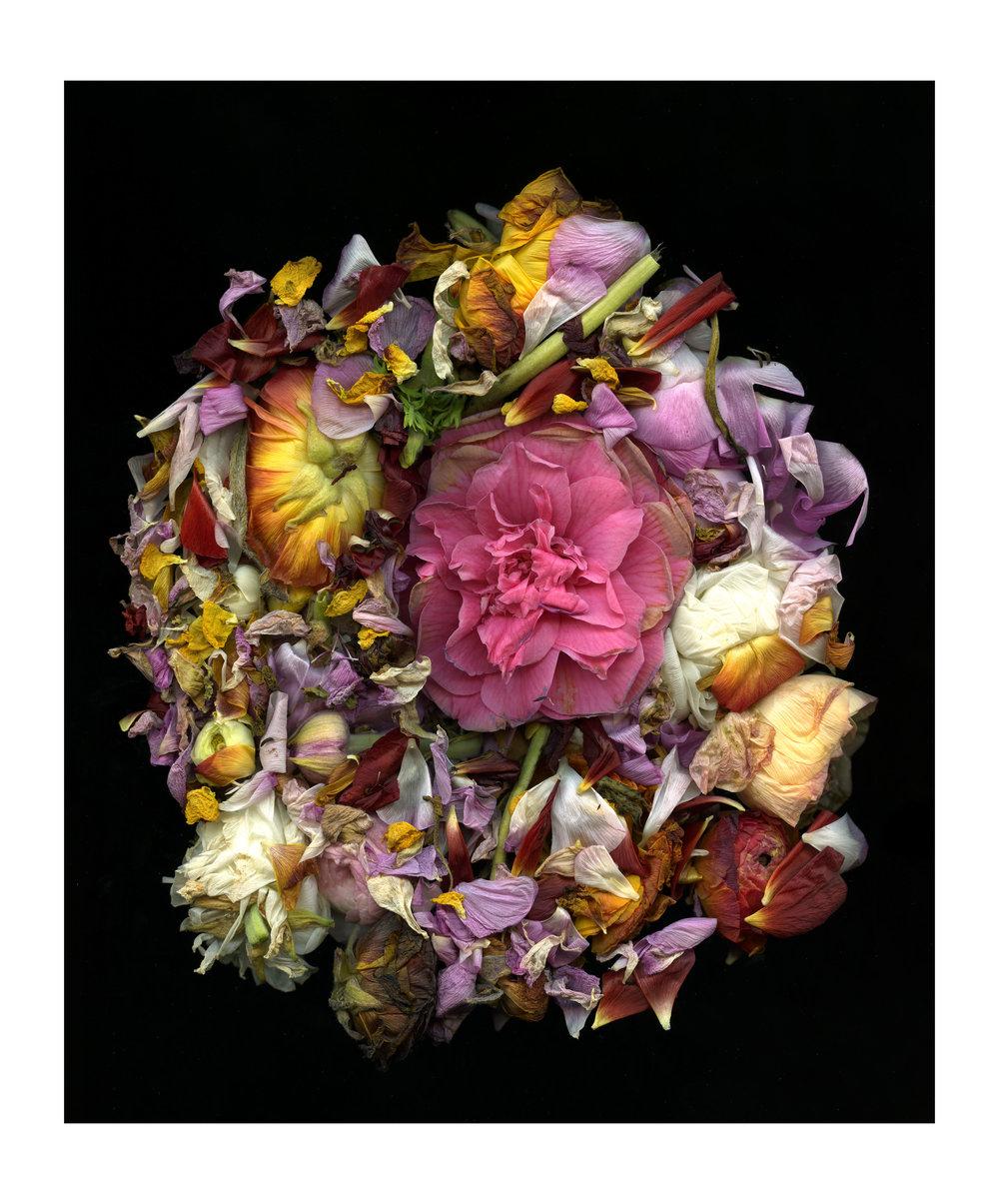 FlowerScan064.jpg