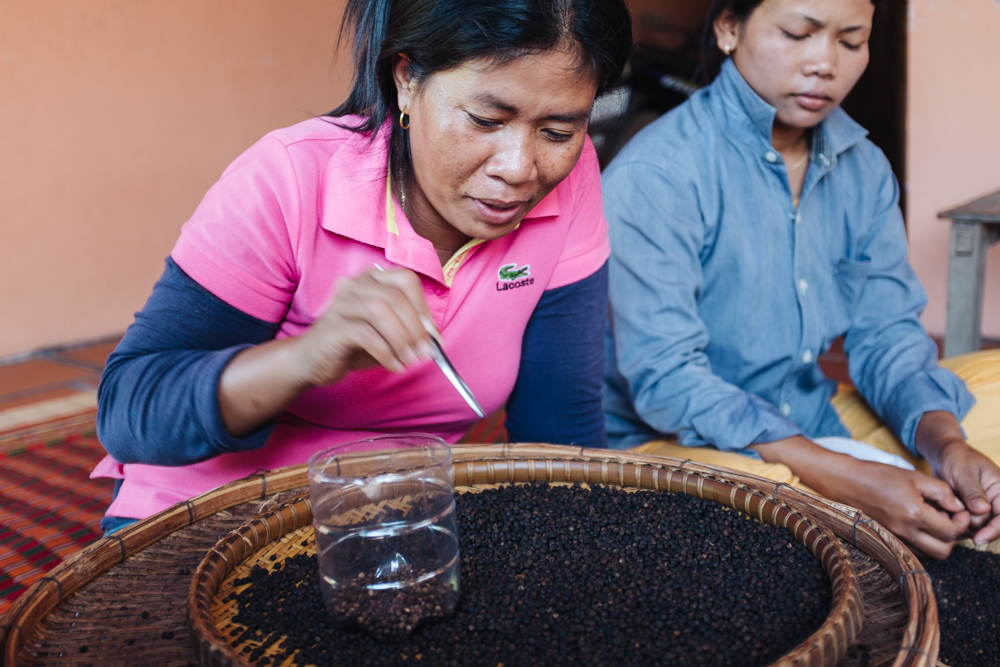 Each harvest is inspected by hand. Only the best peppercorns from the crop are packaged as Kambuja Peppercorns.