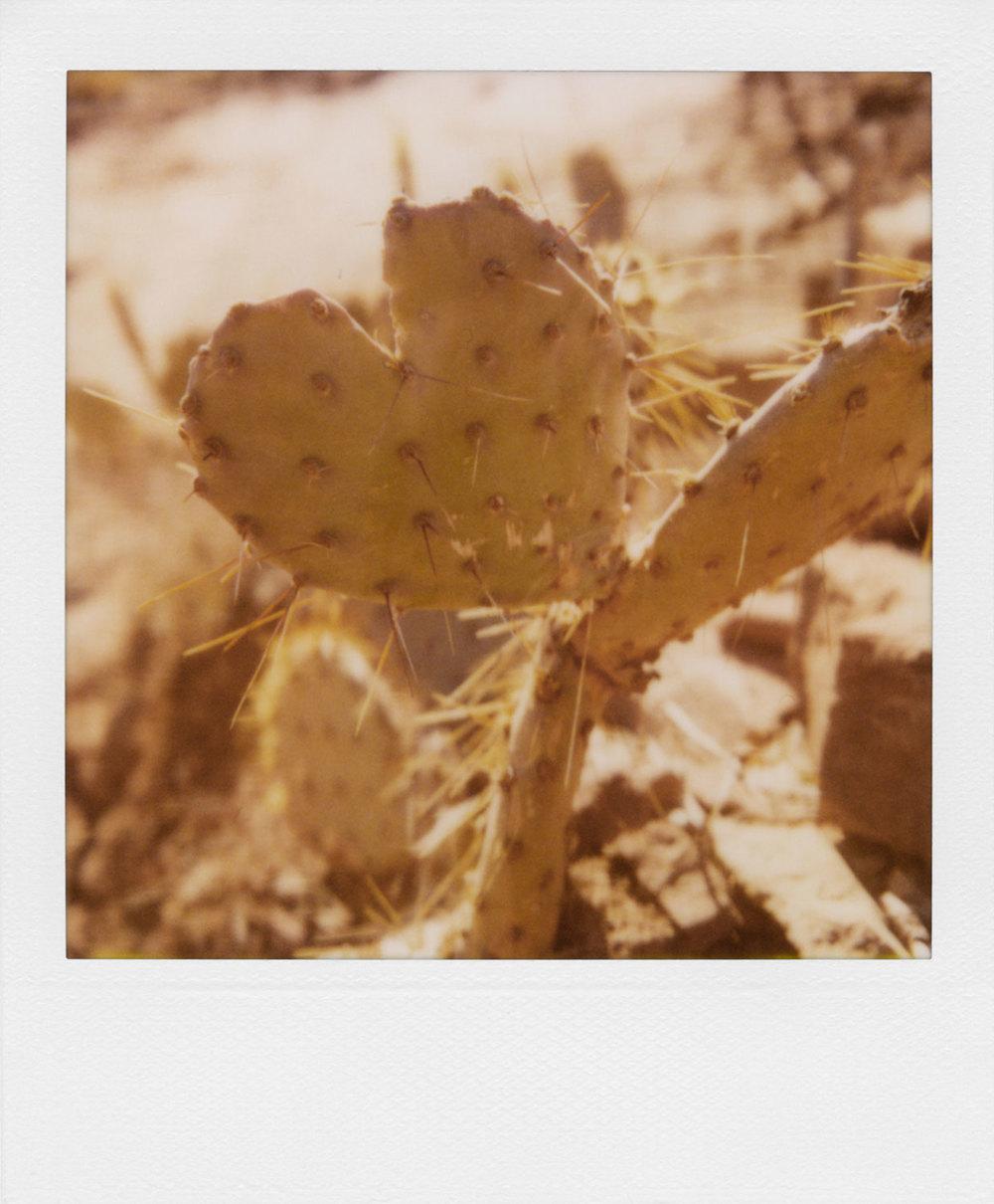 polaroid-30.jpg