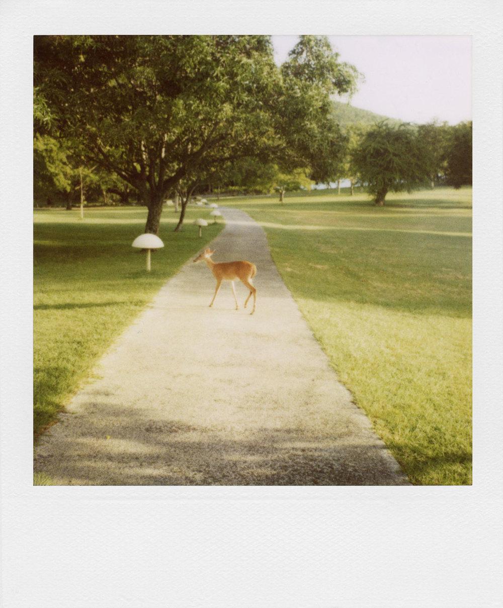 polaroid-62.jpg
