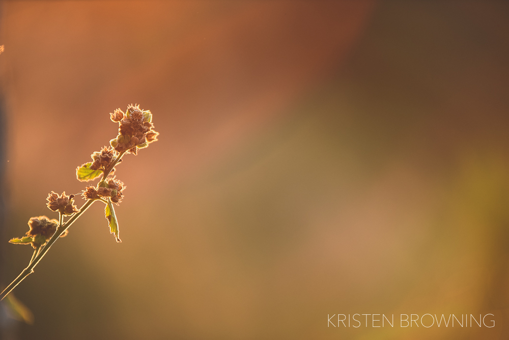 sunlight-golden-hour-sunset-photography