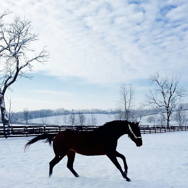 Ballantrae Winter Dashing.jpg