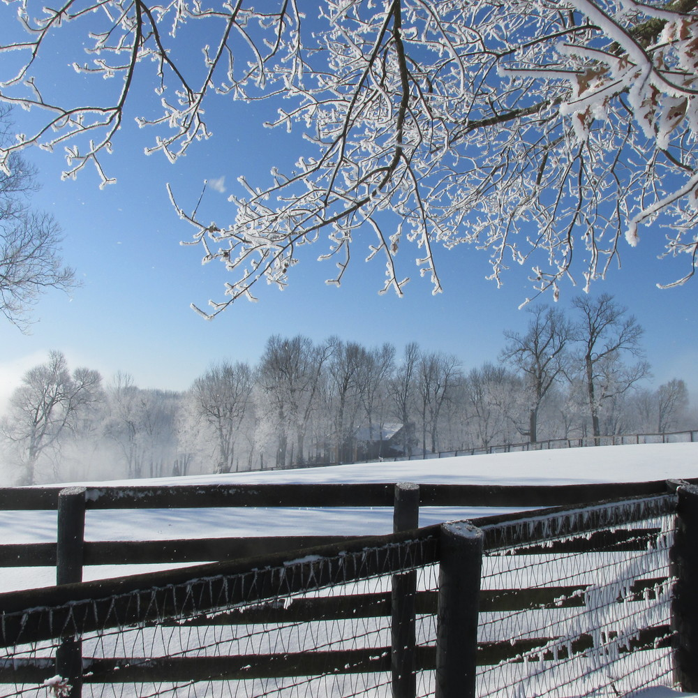 Frankfort Park Farm after the snowstorm.JPG