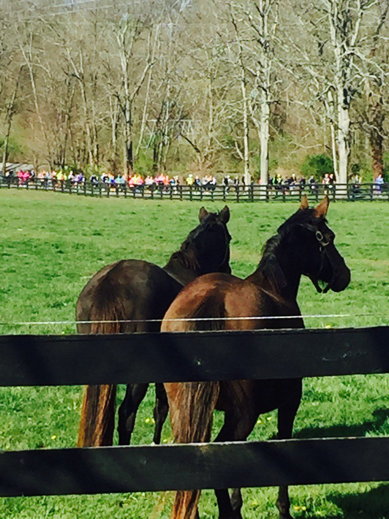 Horses watch runners from RunTheBluegrass pass by Heaven Trees Farm. Photo credit: Dede McGehee.
