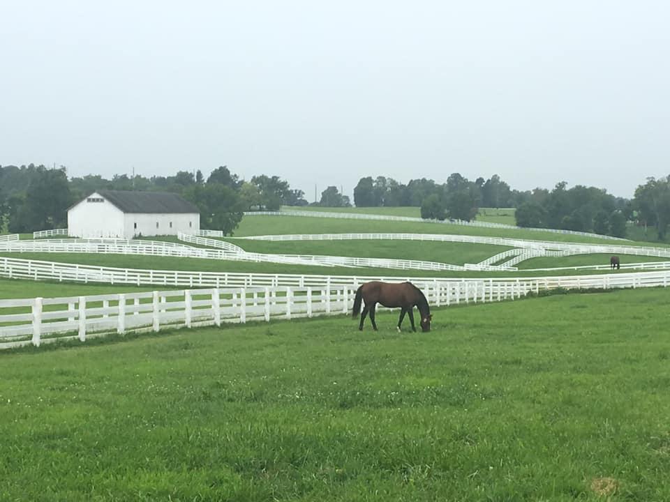 Stallion paddocks at Calumet - RunTheBluegrass