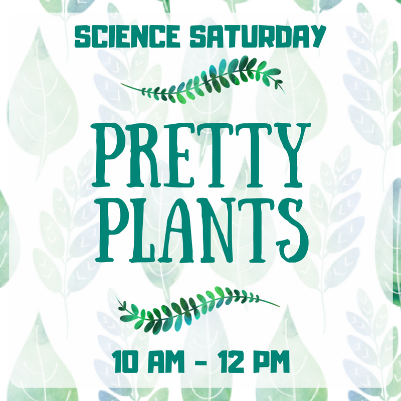 SCIENCE SATURDAY Pretty Plants.png