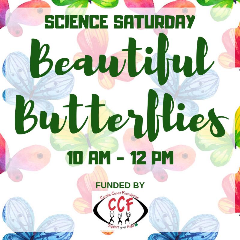 SCIENCE SATURDAY Beautiful Butterflies.png