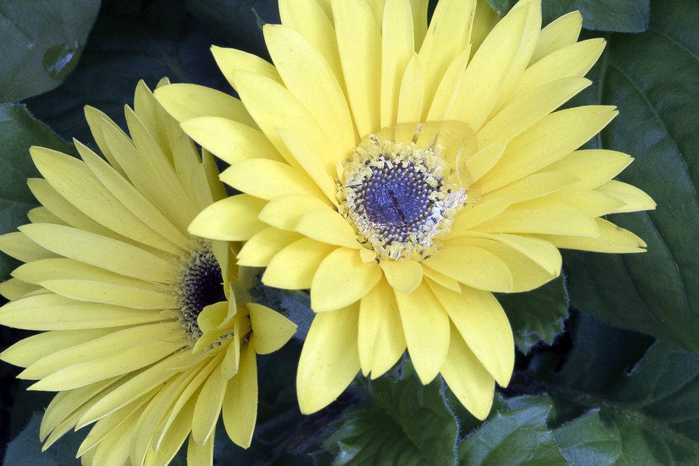 Spring Flowers-60.jpg