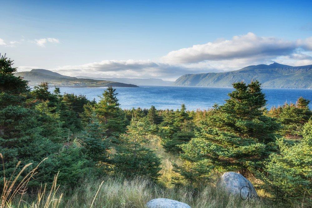 Newfoundland-12.jpg