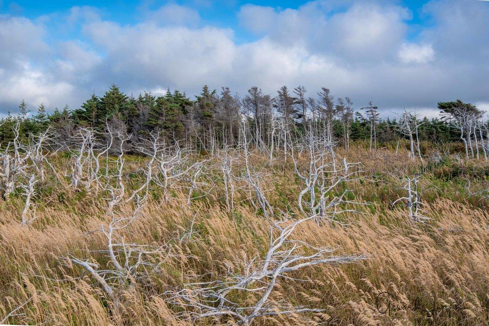 Newfoundland-39.jpg