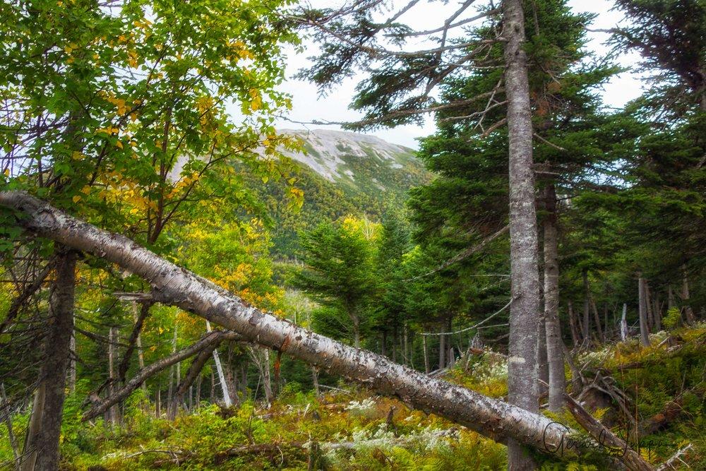 Newfoundland-41.jpg