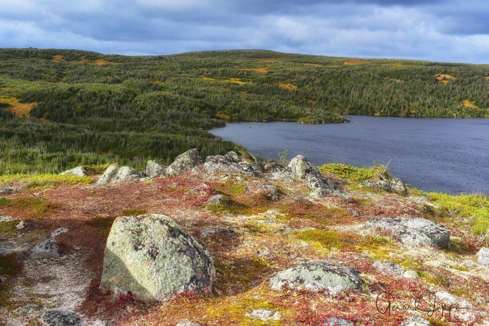 Newfoundland-67.jpg
