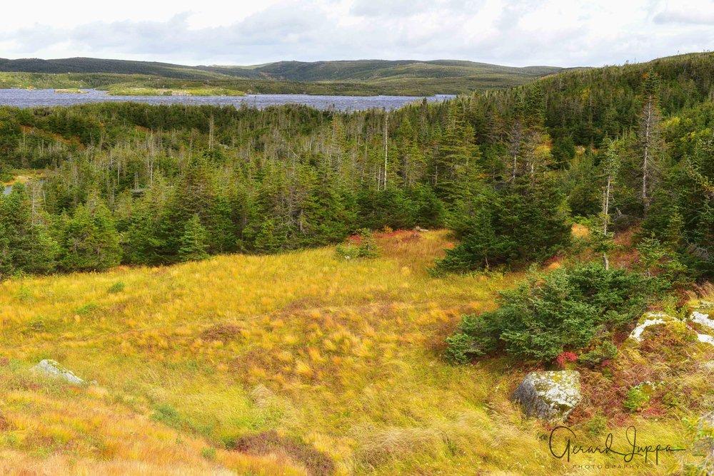Newfoundland-70.jpg