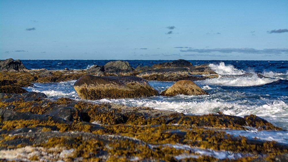 Newfoundland-81.jpg