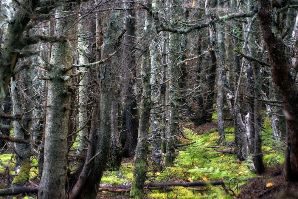 Newfoundland-83.jpg