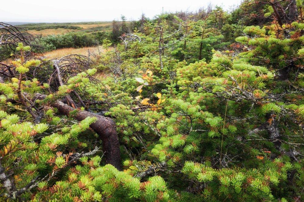 Newfoundland-100.jpg